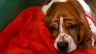 """I cani sognano i padroni"" La ricerca di Harvard"