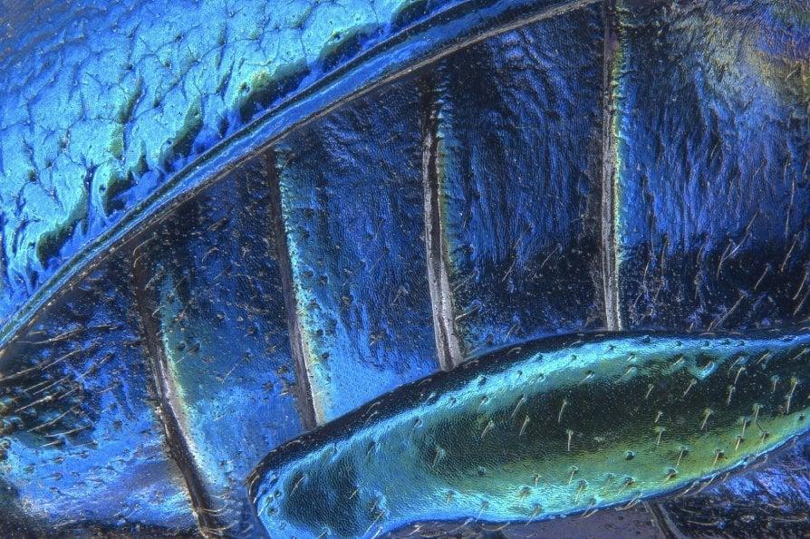 I mille colori che narrano il micromondo