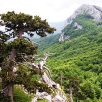 Parchi naturali, l'allarme degli scienziati: