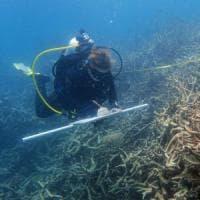 Oltre allo sbiancamento, malattie e predatori: Grande Barriera sempre più