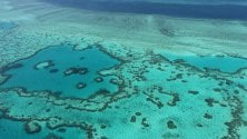 Malattie e predatori: la Grande Barriera soffre