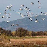 Allarme del Wwf: due terzi della fauna selvatica decimata entro 2020