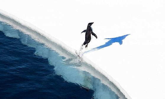 In Antartide il parco marino più grande della Terra. ''Accordo storico per preservare biodiversità''