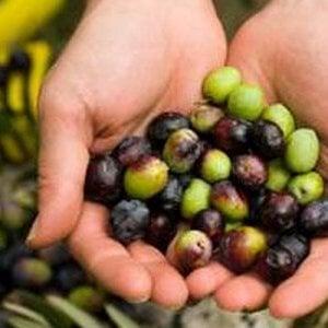 Olio, castagne, miele: l'autunno nero dell'agricoltura made in Italy