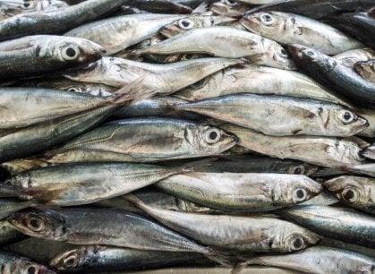 Roma a tavola: la risto-pescheria made in Puglia