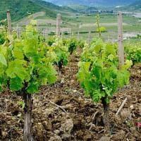 La Bottiglia: il Calabria il bianco svela un gusto tropicale