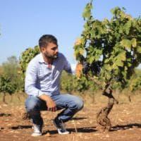 La Bottiglia: in Puglia il bianco diventa impertinente