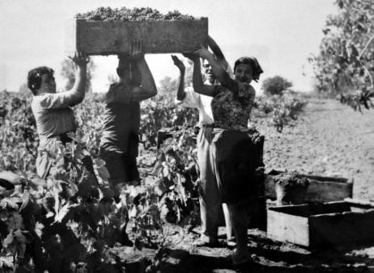 Da bere: le virtù di Morellino e Pecorino