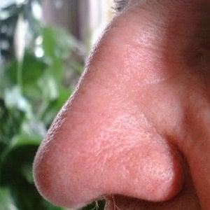 Sorpresa: anche i polmoni sentono gli odori