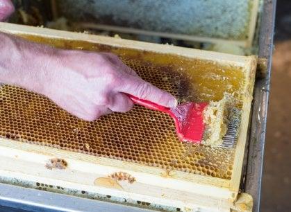 Sul balcone di casa o la terrazza dell'ufficio: il miele si produce in città