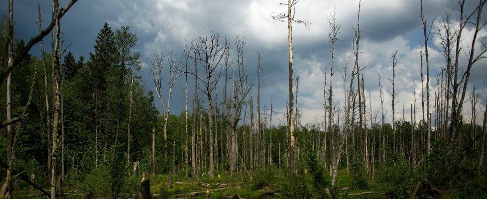 I segreti della foresta minacciata for Cabine della foresta lacustre