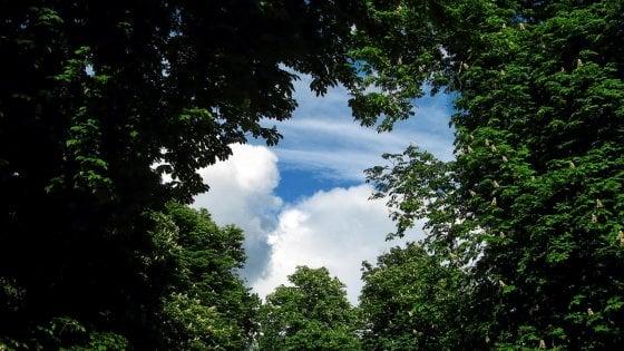 L'emissione di CO2 rallenta, merito del 'respiro' delle piante