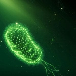 cioè batteri che causano minzione frequente