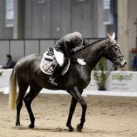Cavalli e umani, l'intesa è nel cuore. Studio:
