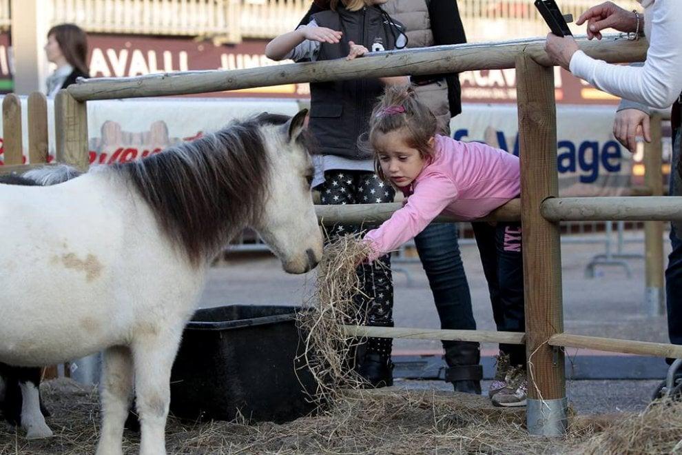 """All'Università di Pisa, un team di ricerca ha messo a confronto il battito del cuore di persone e cavalli, scoprendo che gli elettrocardiogrammi risultavano sincronizzati quando tra l'umano e l'animale c'era intesa. Spiega Paolo Baragli, ricercatore del dipartimento di Veterinaria a Pisa: """"Abbiamo osservato che i parametri fiologici della persona e del cavallo finiscono per avere lo stesso andamento. Possiamo davvero dire che è come se i cuori battessero all'unisono"""""""
