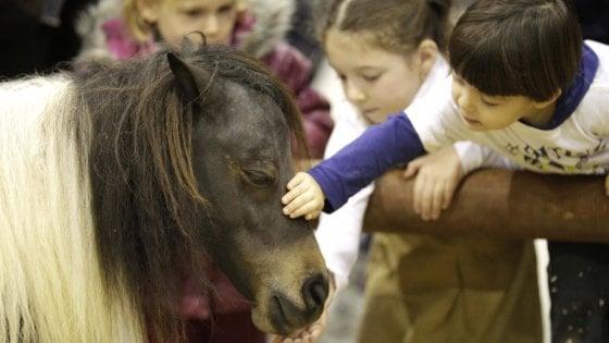 L'incredibile scoperta del battito cardiaco sincronizzato tra cavalli e esseri umani
