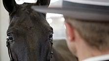 Esseri umani e cavalli: il cuore è all'unisono /   Foto