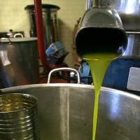 L'olio e i suoi fratelli: colza, girasole e cocco, l'extravergine non è solo