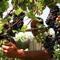 Da bere: quanta dolcezza tra Piemonte e Friuli Venezia Giulia