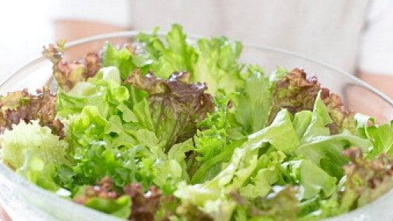 """""""Insalate in busta, il taglio delle foglie aumenta il rischio di salmonella"""""""