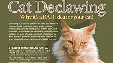 Togliere le unghie ai gatti, ora il New Jersey vieta la barbarie  di CRISTINA NADOTTI