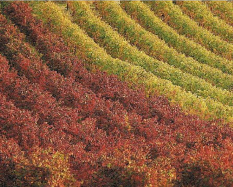 E' la stagione del foliage, perché ci conquista il mondo delle foglie