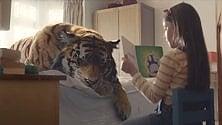 Una tigre nel letto L'emozionante spot Wwf