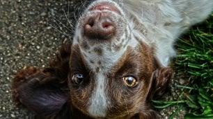 Il tuo cane ricorda più di quanto tu non creda