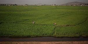Inchiesta.  Agricoltura 4.0 Il digitale sbarca in fattoria