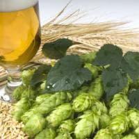 Birra 100% italiana, luppolo autoctono nel boccale