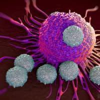 Così il tumore si difende dai farmaci