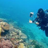 Clima, Australia: distrutto il 67% della Grande barriera corallina