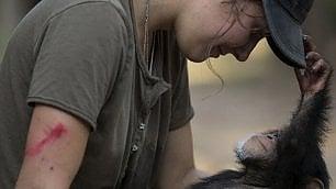 Quanto amore nel rehab che cura i baby scimpanzé