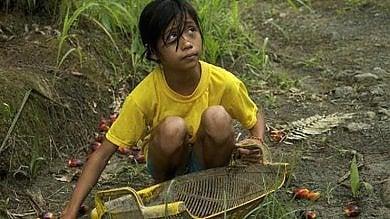 Indonesia, il lavoro minorile forzato imposto dai marchi che usano olio di palma
