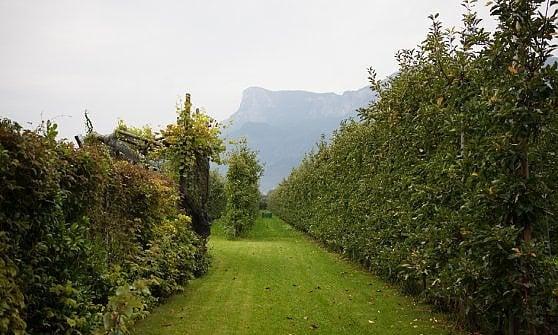 """Nella malga in Alto Adige lo """"spumante"""" è di mele"""