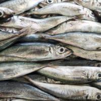 Roma a tavola: da Settemari il pesce prende il largo con i sapori di Ischia