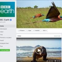 La natura batte X Factor: dai social alla tv, Planet Earth è un successo
