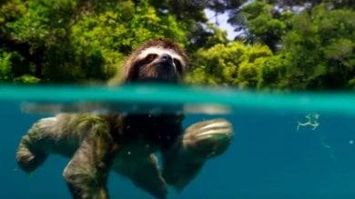 X-Factor si inchina alla natura In tv vincono i documentari  video