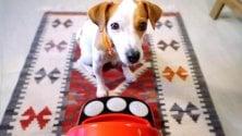 Bautiful Box, la console per cane: il cibo è gioco