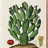 """Stefano Mancuso: """"Ecco a cosa pensano le piante"""""""