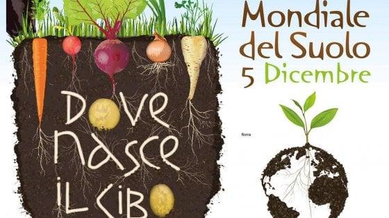 Giornata mondiale del suolo, Coldiretti: ''In Italia -28% terre coltivate in 25 anni''