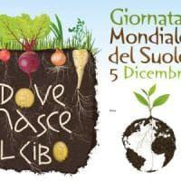 Giornata mondiale del suolo, Coldiretti: ''In Italia -28% terre coltivate