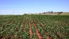 Giornata mondiale del suolo, Coldiretti: -28% terre coltivate in 25 anni
