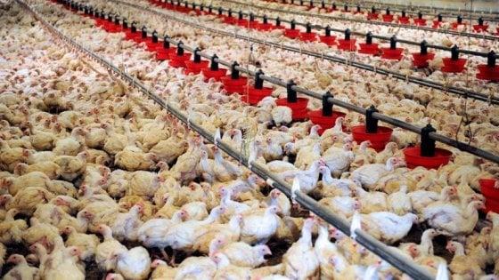 """""""Così l'industria alimentare sta distruggendo il pianeta ..."""