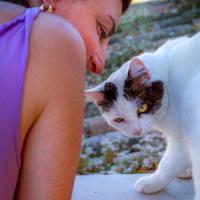 Un manifesto per l'amore dei felini di casa:
