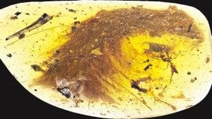 Jurassic Park in Birmania  nell'ambra c'è un dinosauro