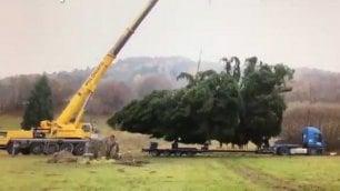 C'è da spostare l'albero di Natale Ma pesa troppo e la gru si ribalta
