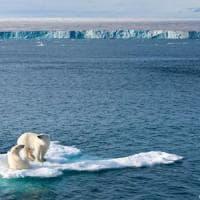 ''Orsi polari, ridotti di un terzo in 35 anni''