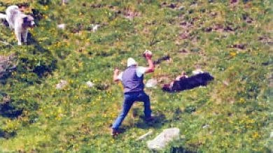 Uccisero il cane a pietre e bastonate  La procura vuole due anni di condanna