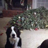 Gli alberi di Natale in 9 case di italiani su 10. Quelli veri sono 3,5 milioni
